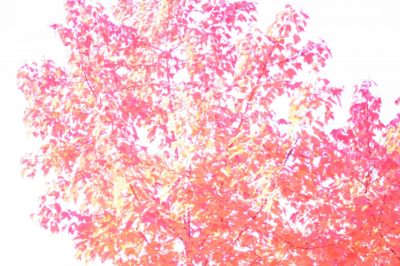 Autumn colors, 2007 008