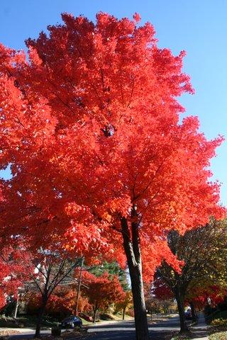 Autumn_colors,_2007_014