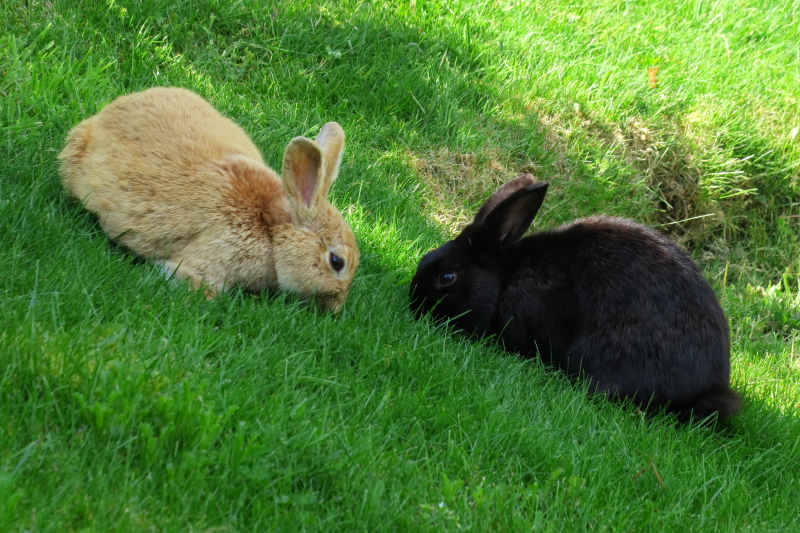 bunnies_bigger