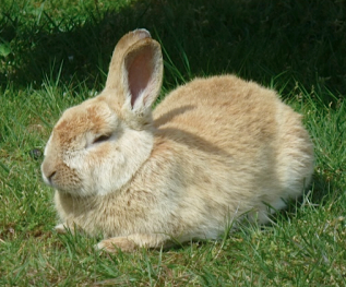 bunny photo mom 30april16a