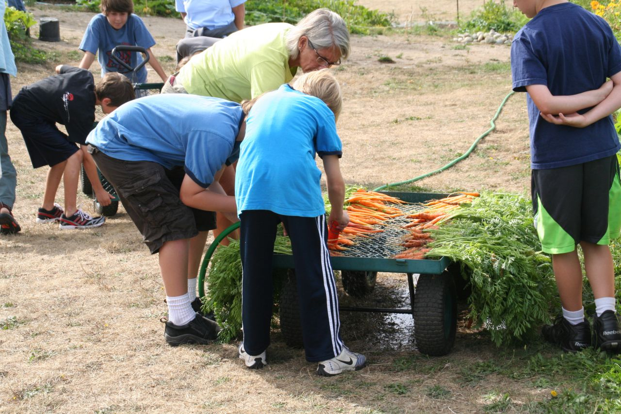 Children cleaning carrots