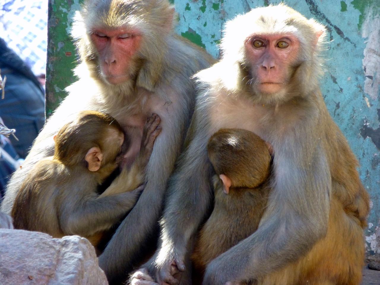 Monkeys, monkeys everywhere!